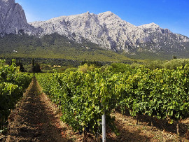 Visit vineyards and wine cellars to taste the heart-healthy Nepente and Cannonau di Sardegna