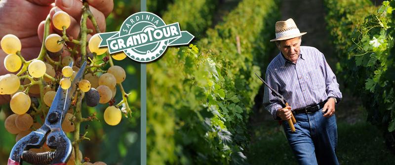 Emidio Oggianu a Sardinian winemaker